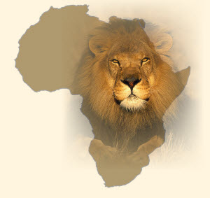 african lion conservation