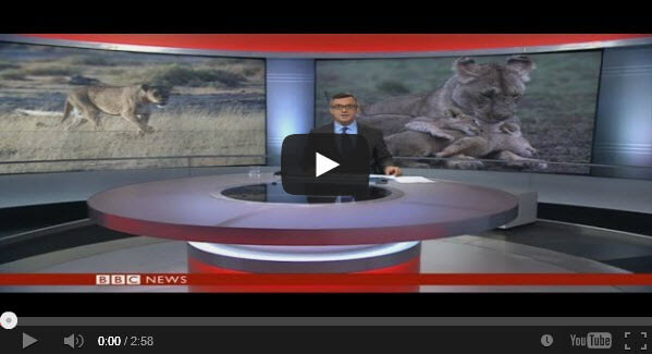 bbc news panthera west african lions